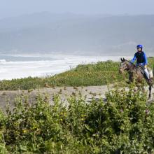 Horseback riding beach